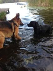 Luna och Mollberg tar ett svalkande bad i sommarvärmen